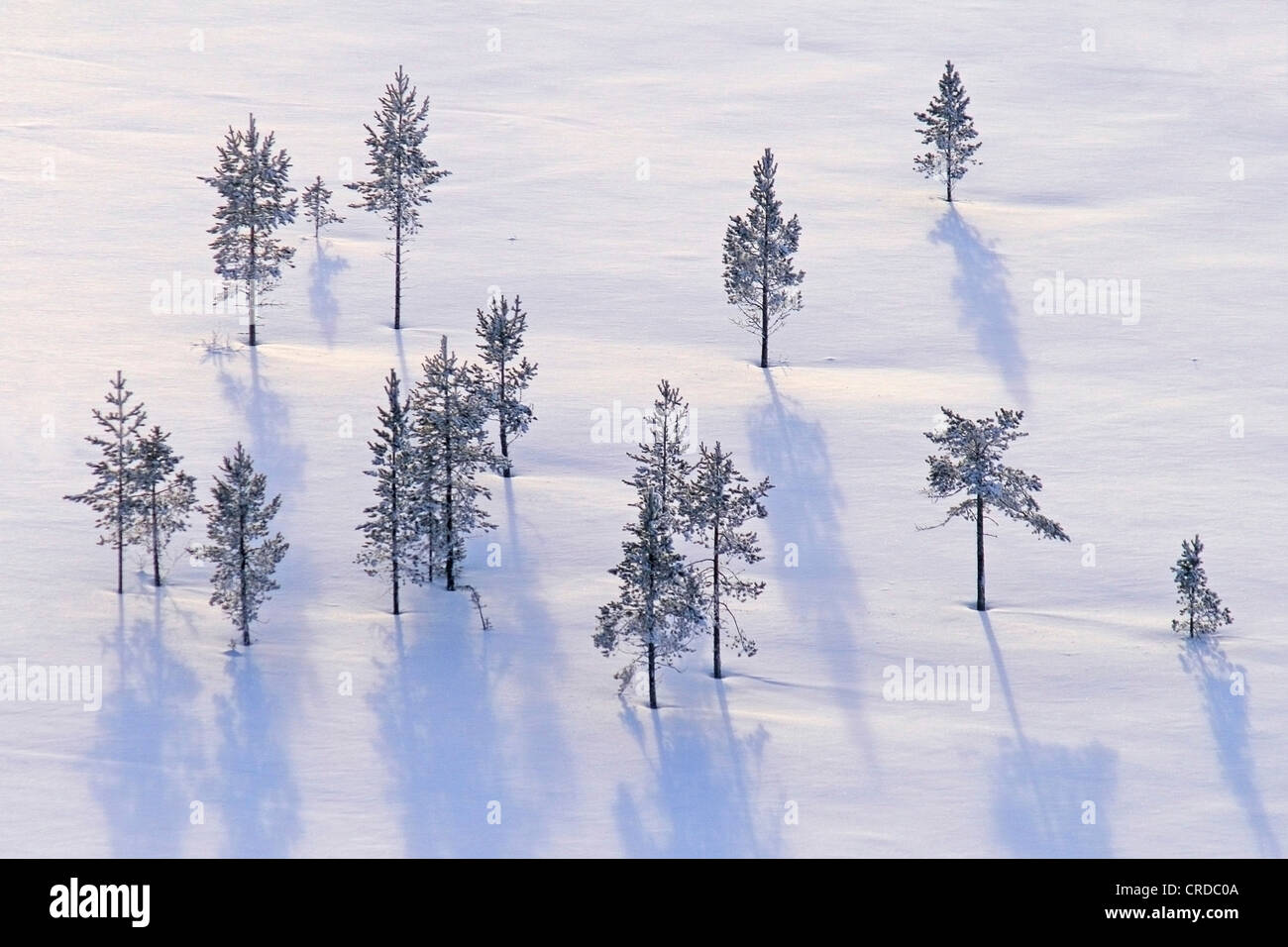 Photographed from air. Winter trees, Finland, Lapland, Kittilae - Stock Image