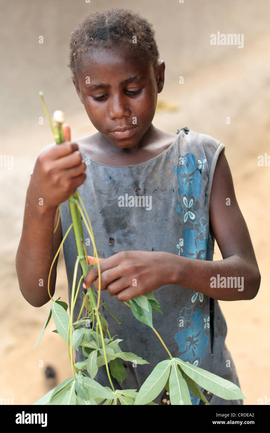 Tarah 7, prepares cassava leaves as she cooks with her mother Edith at their home in the village of Jenneh, Bomi - Stock Image