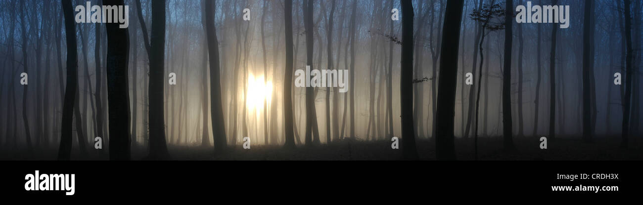 Sun shining through a fog-filled forest, Swabian Alb, Baden-Wuerttemberg, Germany, Europe - Stock Image