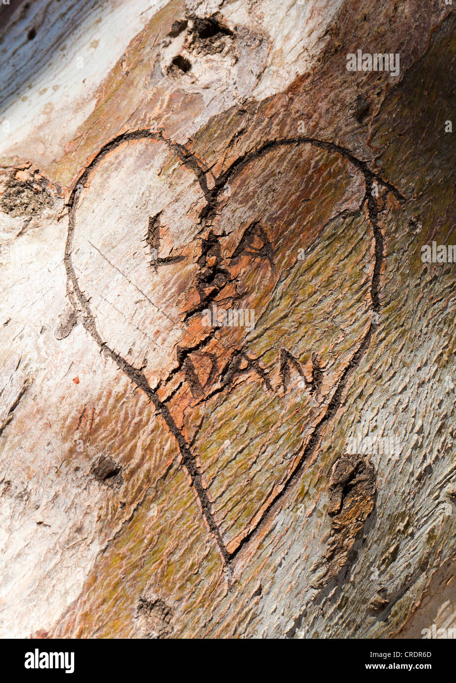 Heart carving on tree trunk - Stock Image