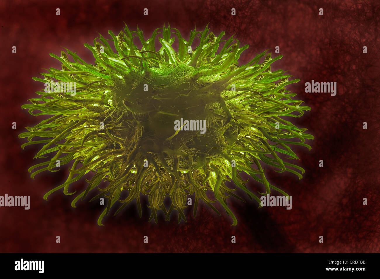 Dendritic cell of the immune system, illustration - Stock Image