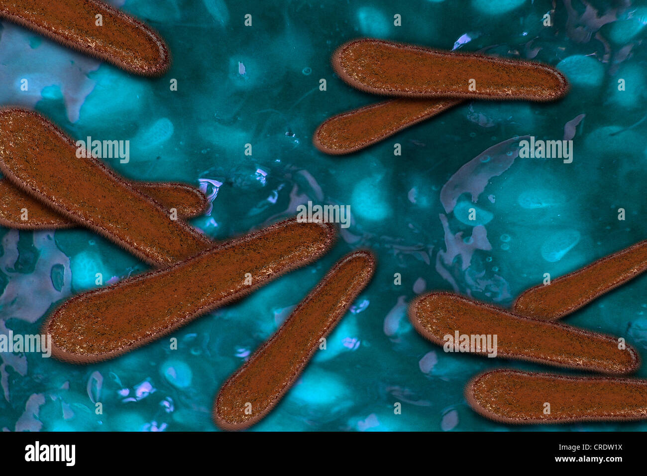 Bacteria as pathogens in the human body, illustration - Stock Image