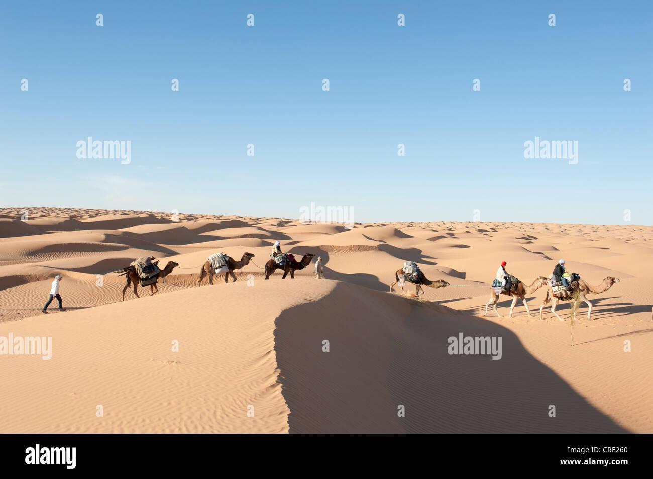 Sustainable tourism, camel trekking, camels, dromedaries (Camelus dromedarius), sand dunes, Sahara desert between - Stock Image