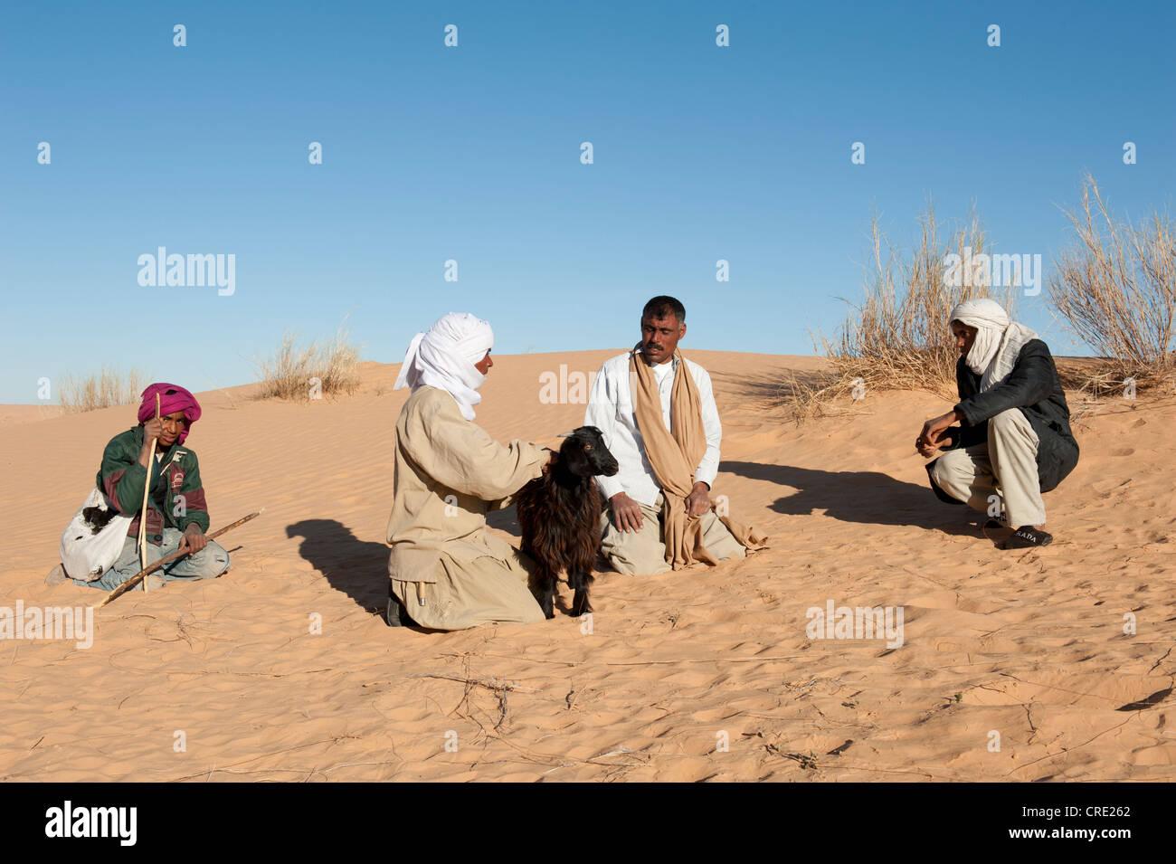 Negotiation, Bedouins buying a goat, sand dunes, Sahara desert between Douz and Ksar Ghilane, Southern Tunisia, - Stock Image