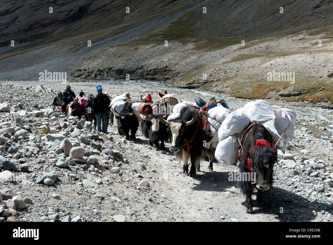 Tibetans with packed yaks, Tibetan Buddhism, pilgrimage route to the sacred Mount Kailash, Gang Rinpoche, Kora, - Stock Image