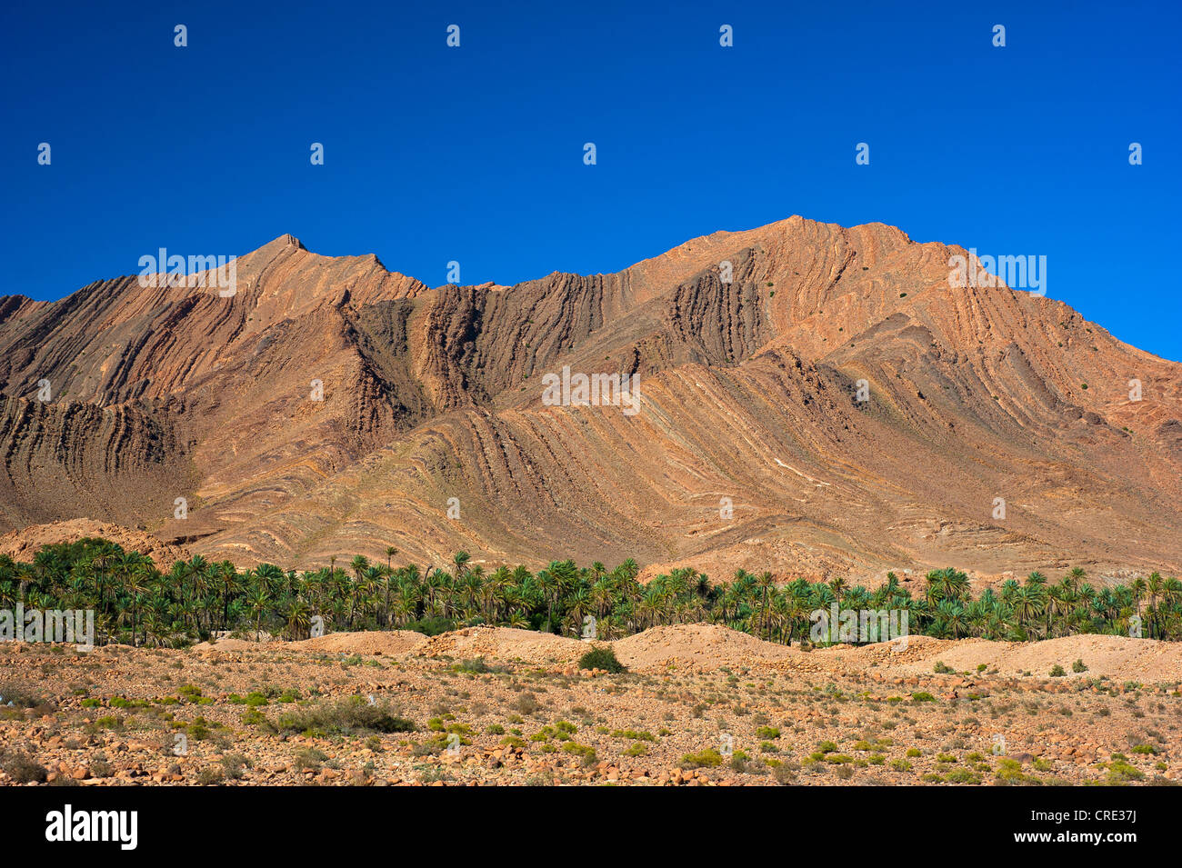 Imposing mountain landscape with eroded hillsides in the Ait Mansour Valley, date palms growing in the dry river - Stock Image