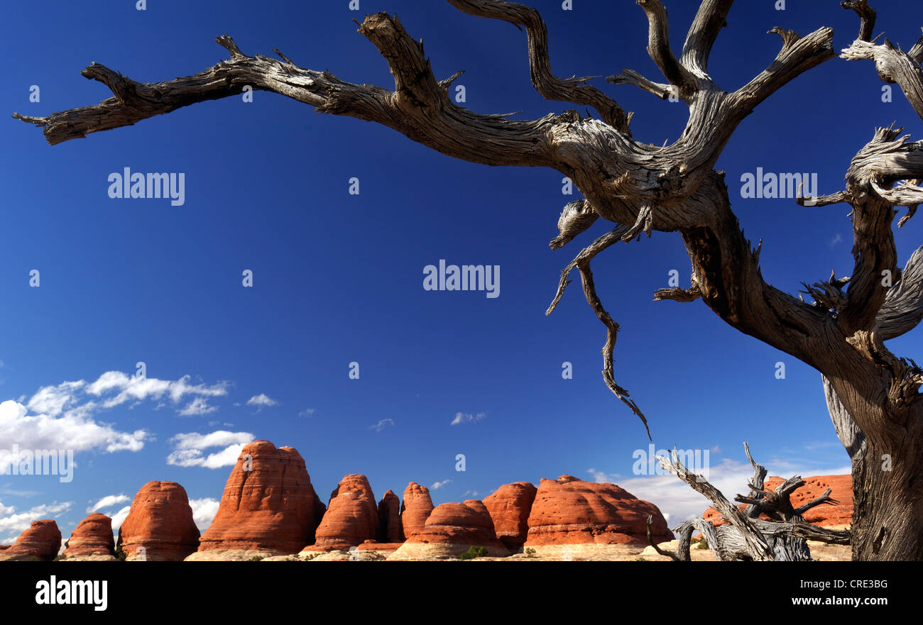 sand stone formation The Needles at Canyonland National Park, USA, Utah, Canyonlands National Park - Stock Image