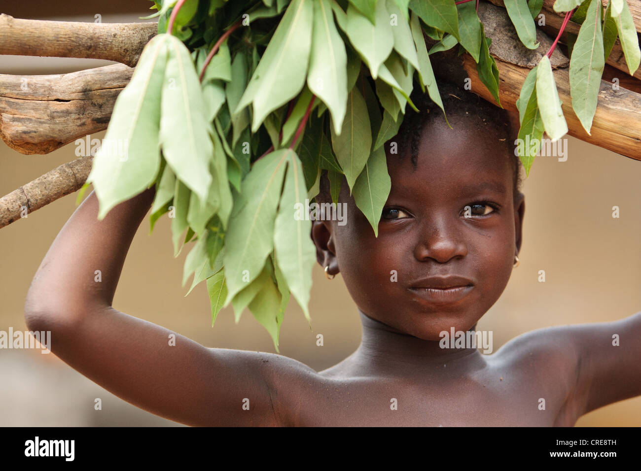 A girl carries firewood and cassava leaves on her head in the village of Kawejah, Grand Cape Mount county, Liberia - Stock Image