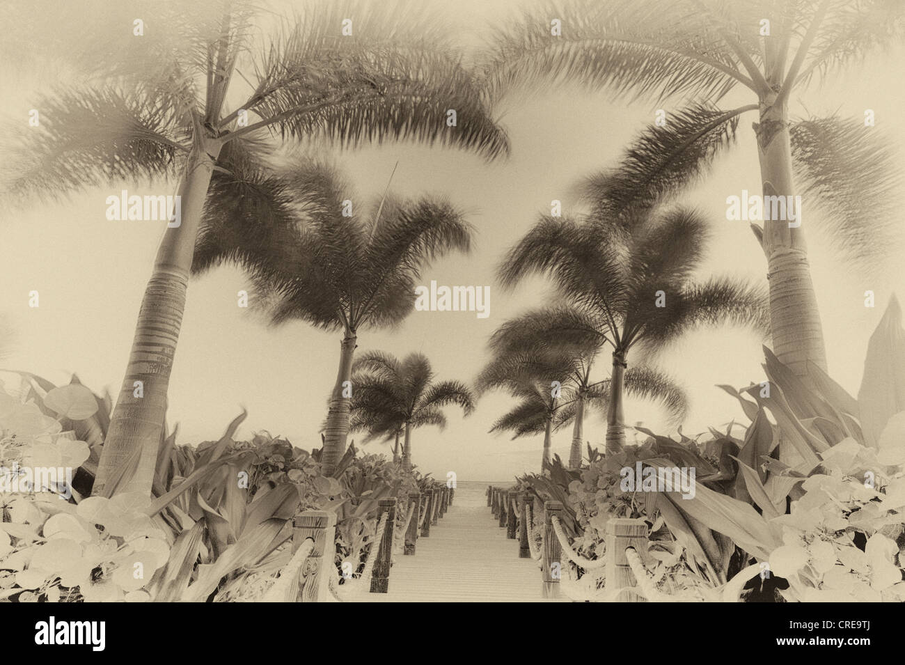 Pathway and palm trees blowing in breeze. Providenciales. Turks and Caicos. - Stock Image
