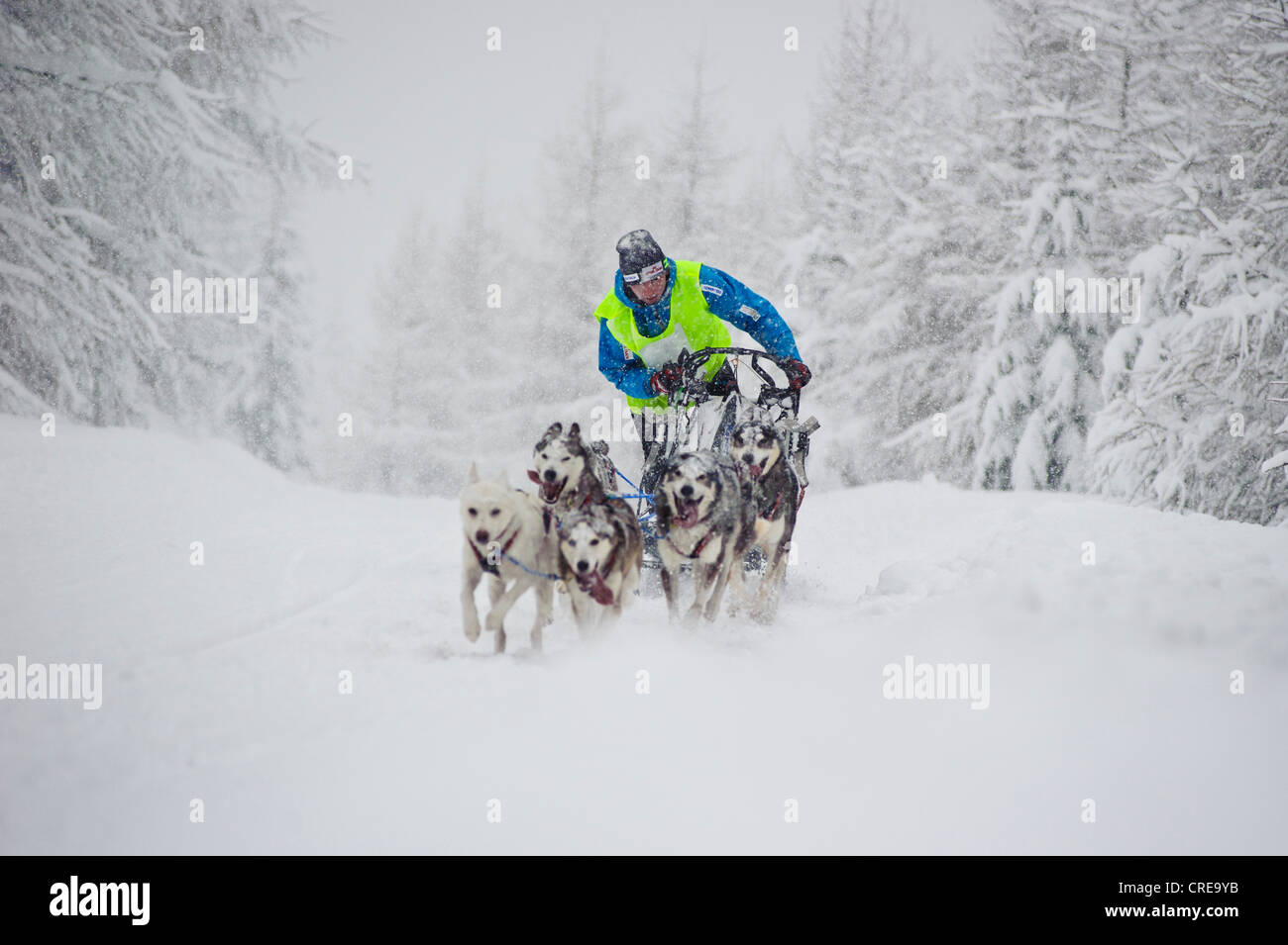 Dogsled race in Jakuszyce, Poland. - Stock Image