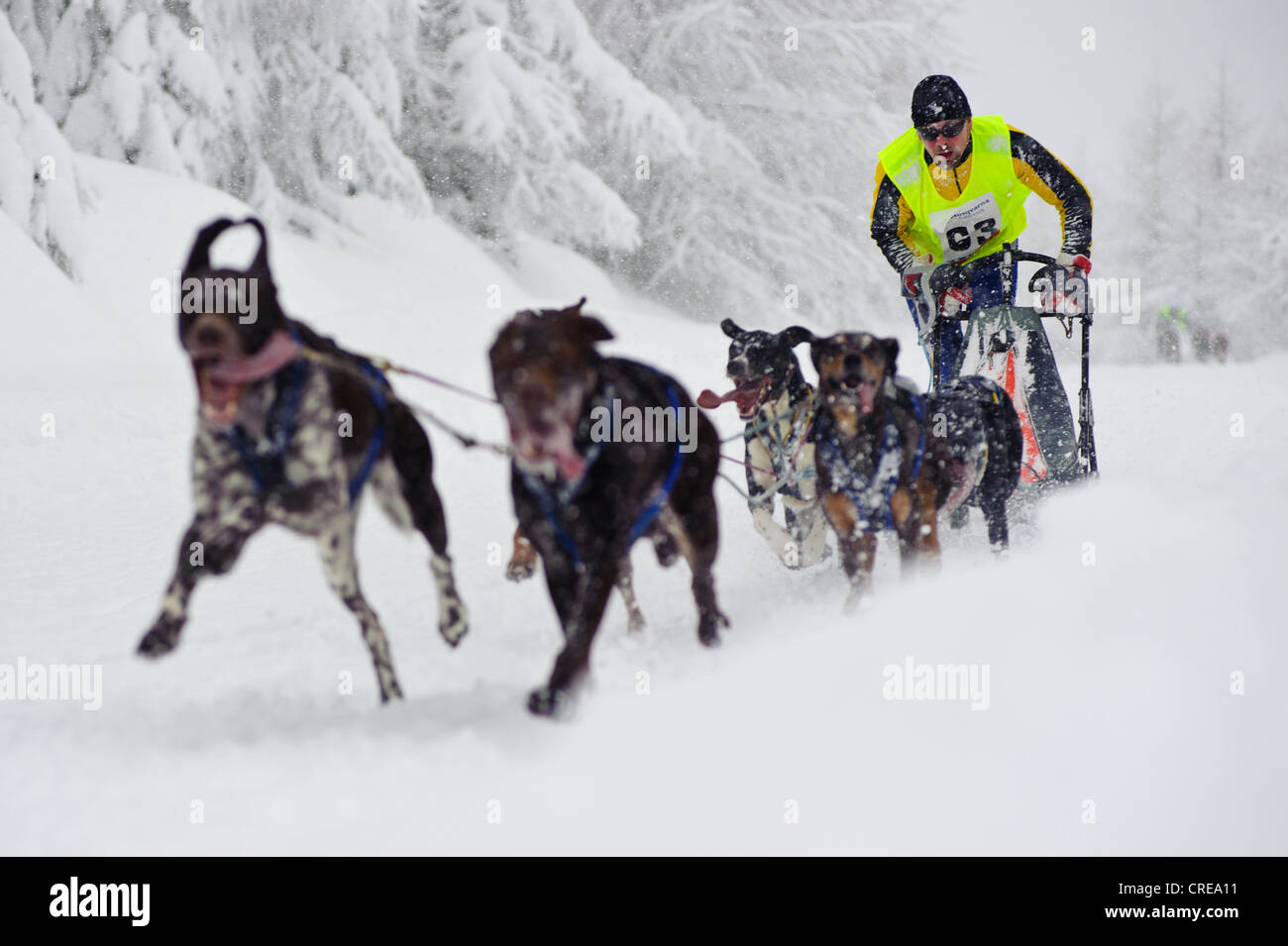 Border Rush Dog Sled race in Jakuszyce, Poland. - Stock Image