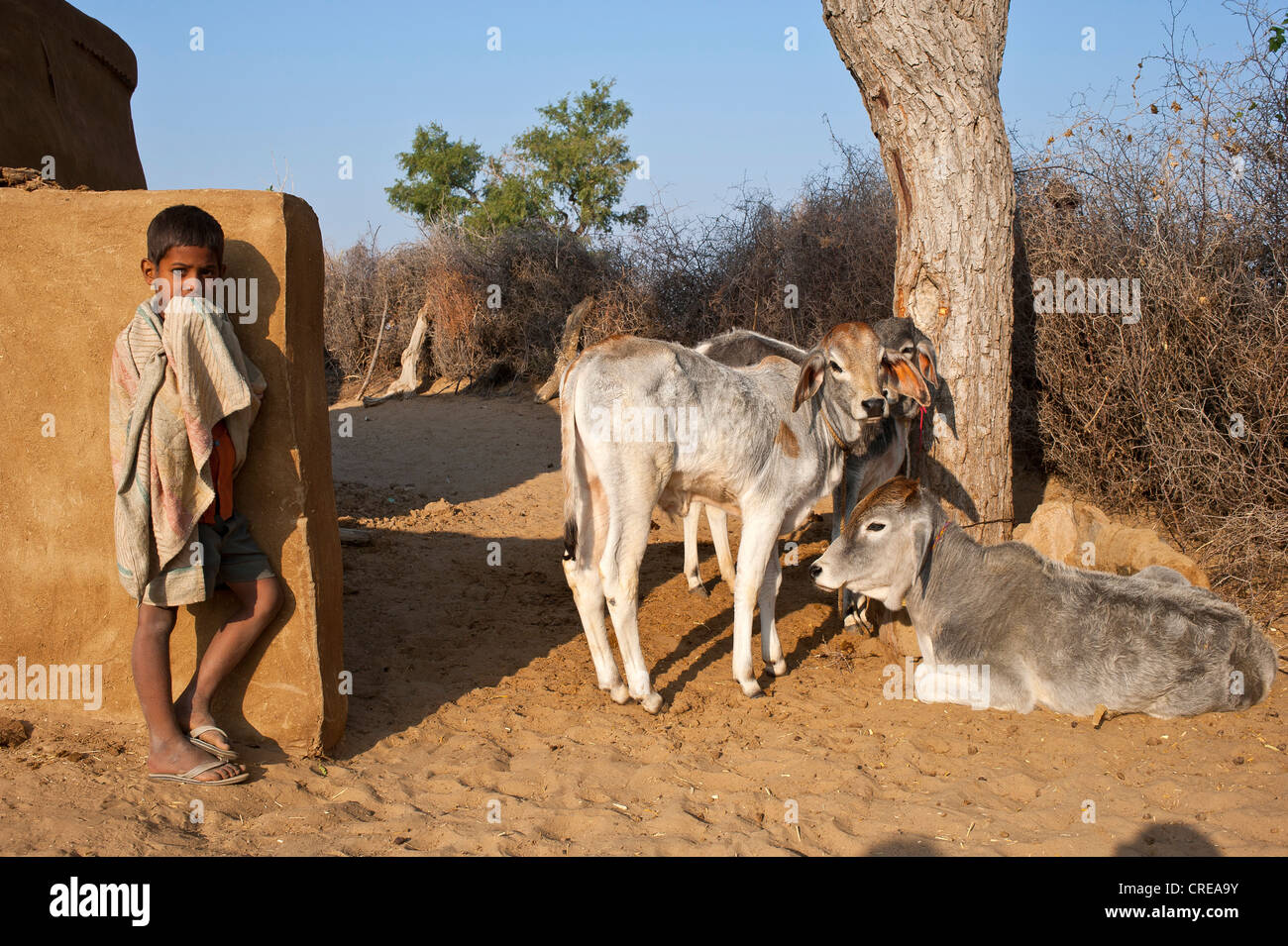 Curious little boy standing in front of a wall, the family's cows are sitting under a tree, Thar Desert, Rajasthan, - Stock Image