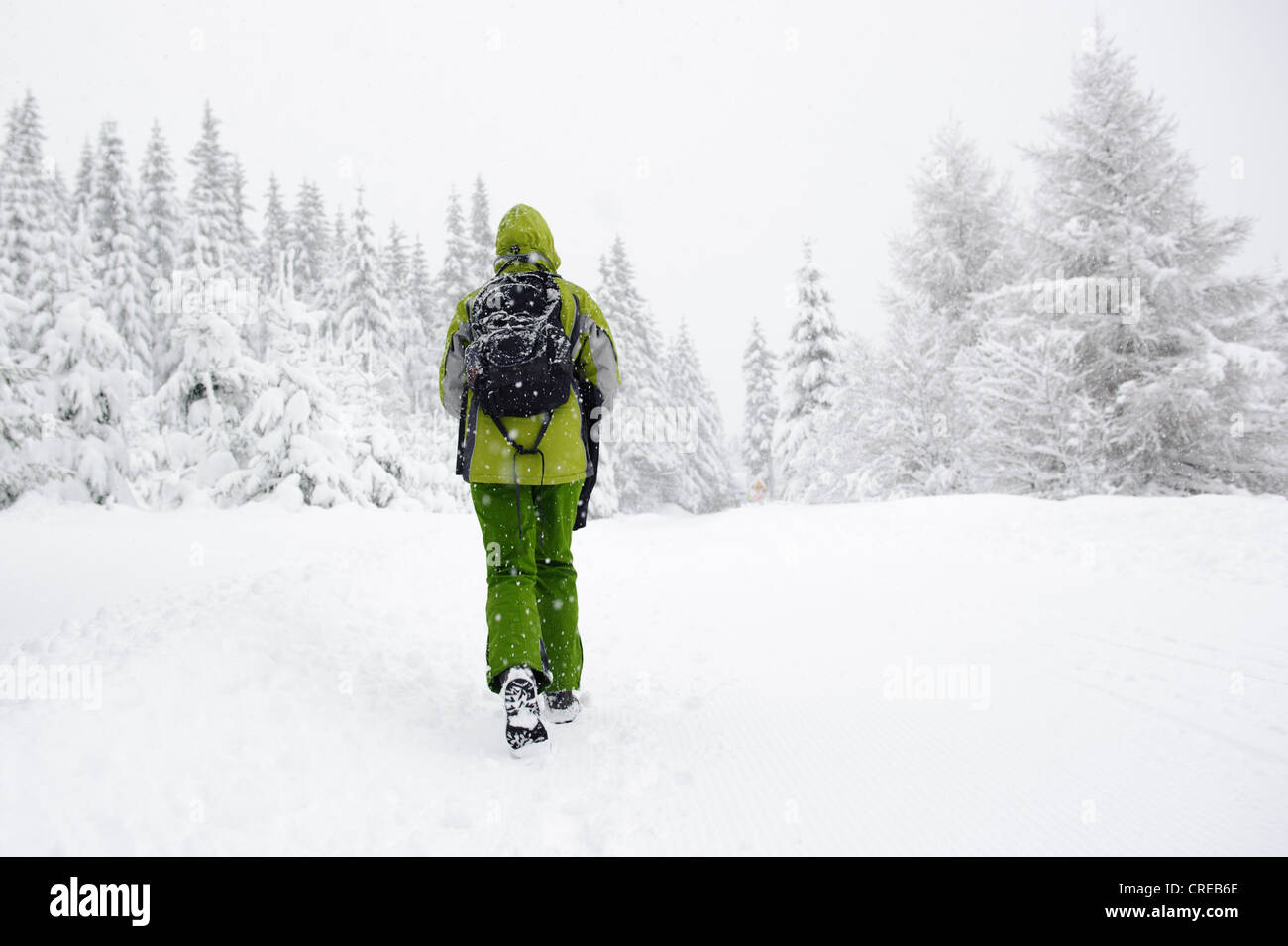 Woman hiking in winter forest landscape, Jakuszyce, Poland. - Stock Image