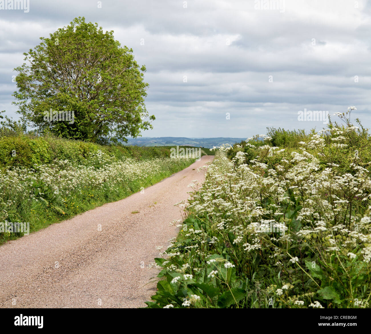 North Devon countryside showing hedgerows and country road at Alverdiscott, Devon, England - Stock Image