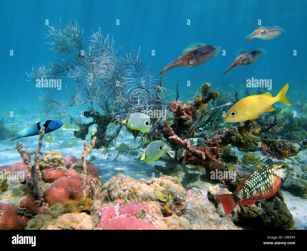 Caribbean Sea Animal Life: Underwater Sea Life With Tropical Fish And Caribbean Reef