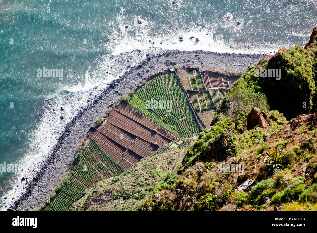 Fields on the Atlantic coast, at the bottom of the 580-meter-high Cabo Girao cliff near , Portugal, Europe - Stock Image