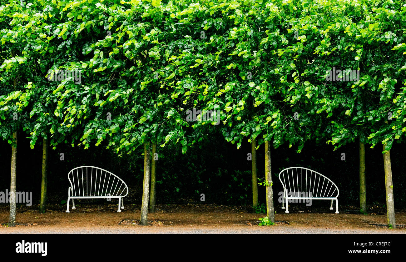 Picture of: Two Empty Art Deco Wrought Iron Benches Under Green Foliage At Stock Photo Alamy