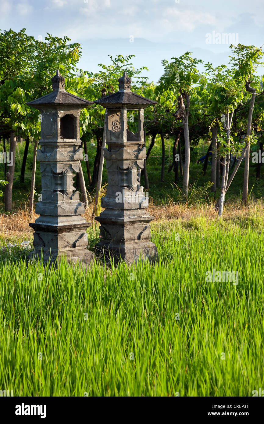 Shrines in honor of Dewi Sri, the goddess of rice, rice field, Bali, Indonesia, Southeast Asia, Asia - Stock Image