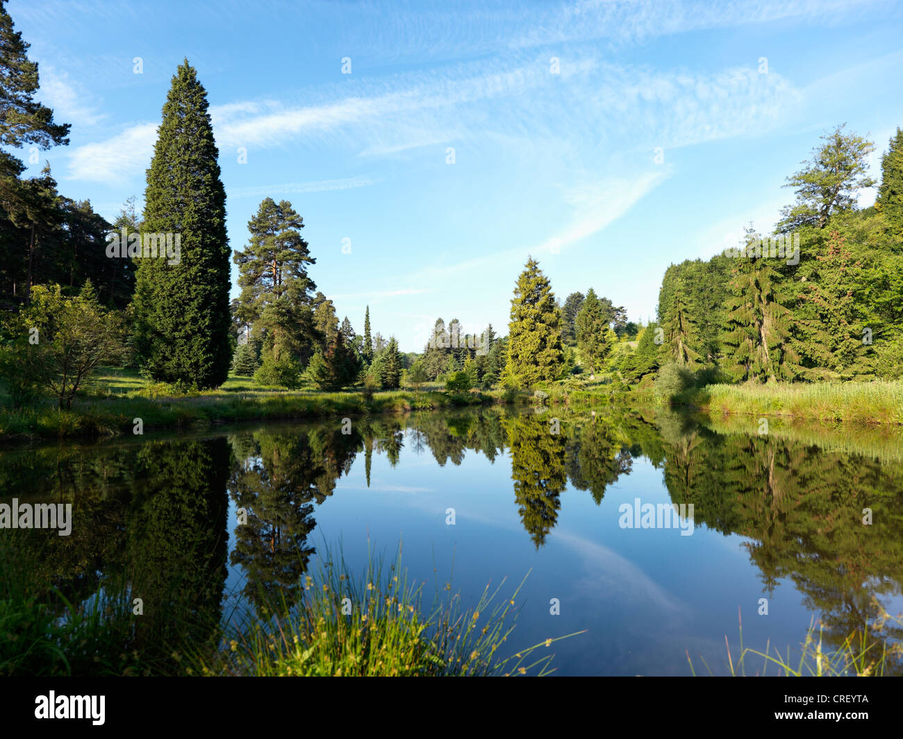 Bedgebury National Pinetum Forest Kent - Stock Image