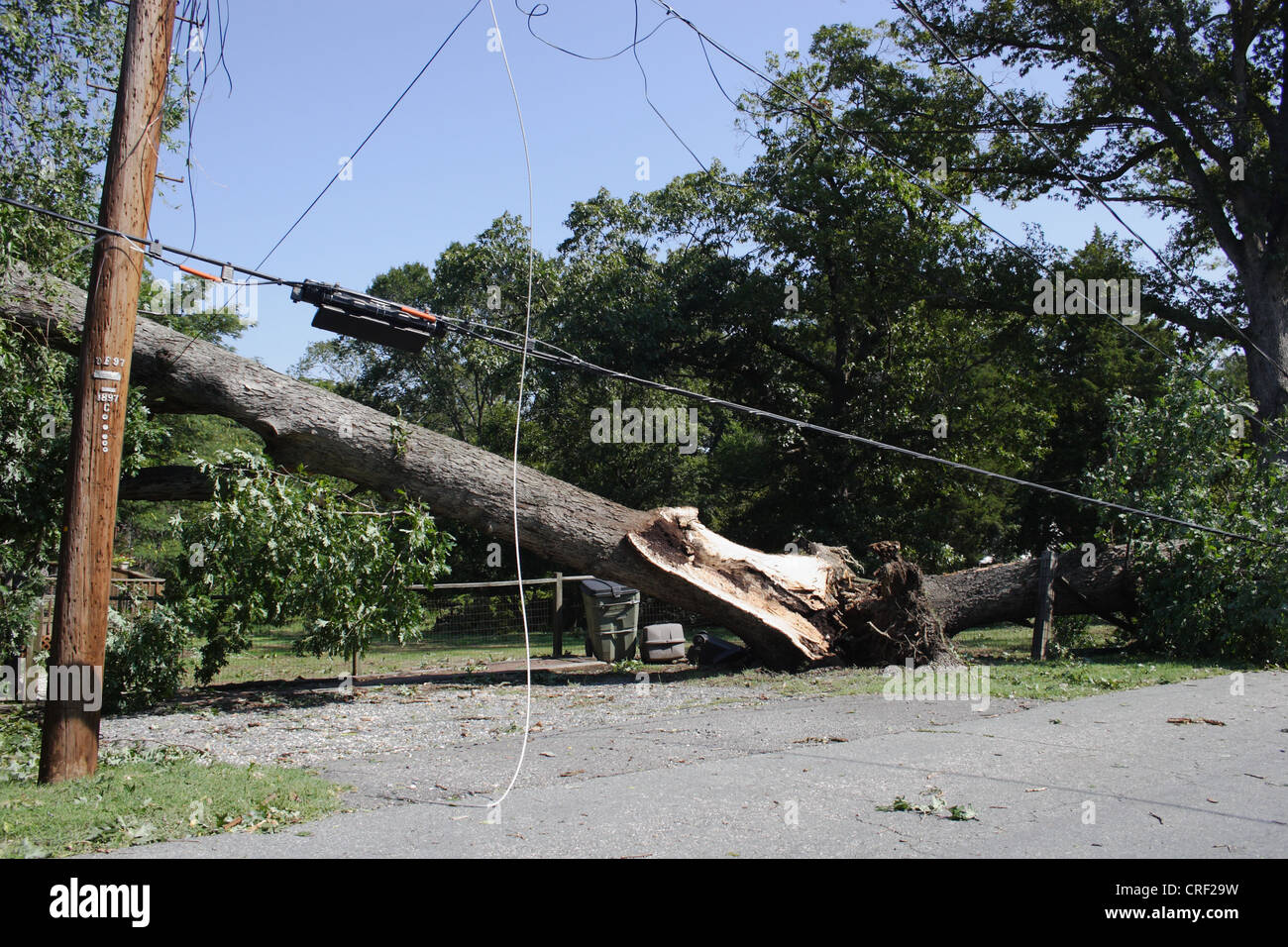 Tropical storm Irene causes widespread power outages in Virginia. Irene's winds toppled large trees onto power - Stock Image