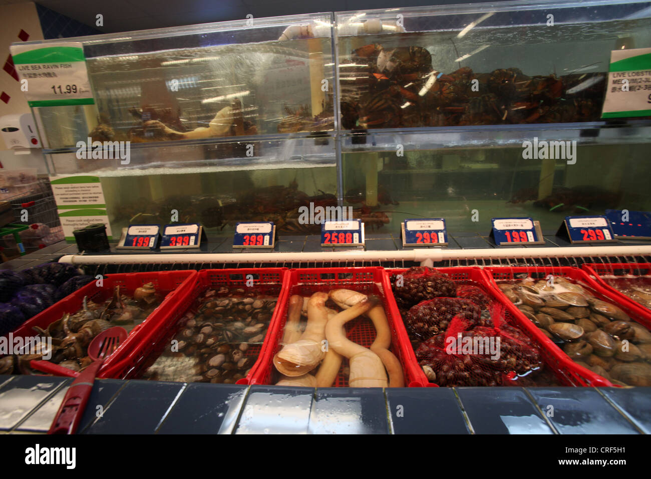 Live seafoods in T&T Chinese market in Toronto, Canada - Stock Image