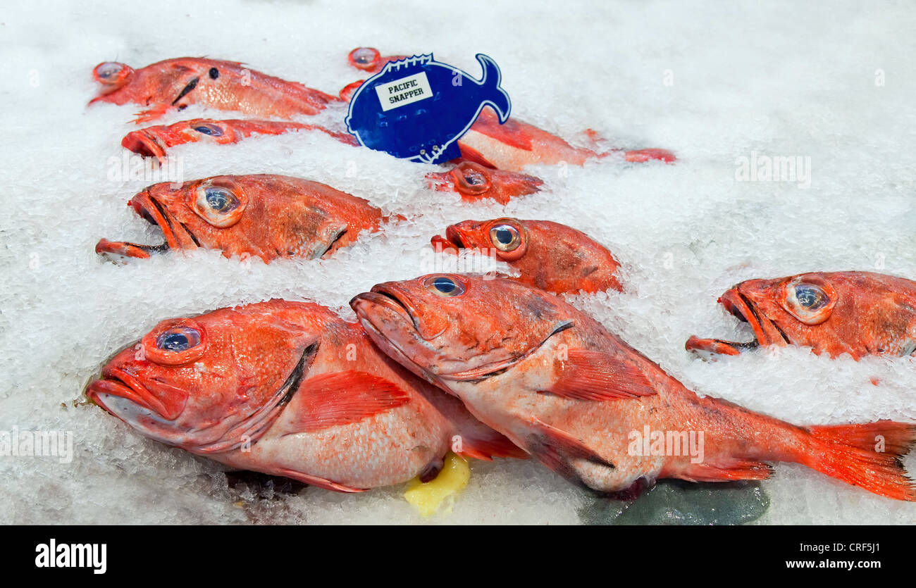 Pacific red snapper on ice in the market Stock Photo