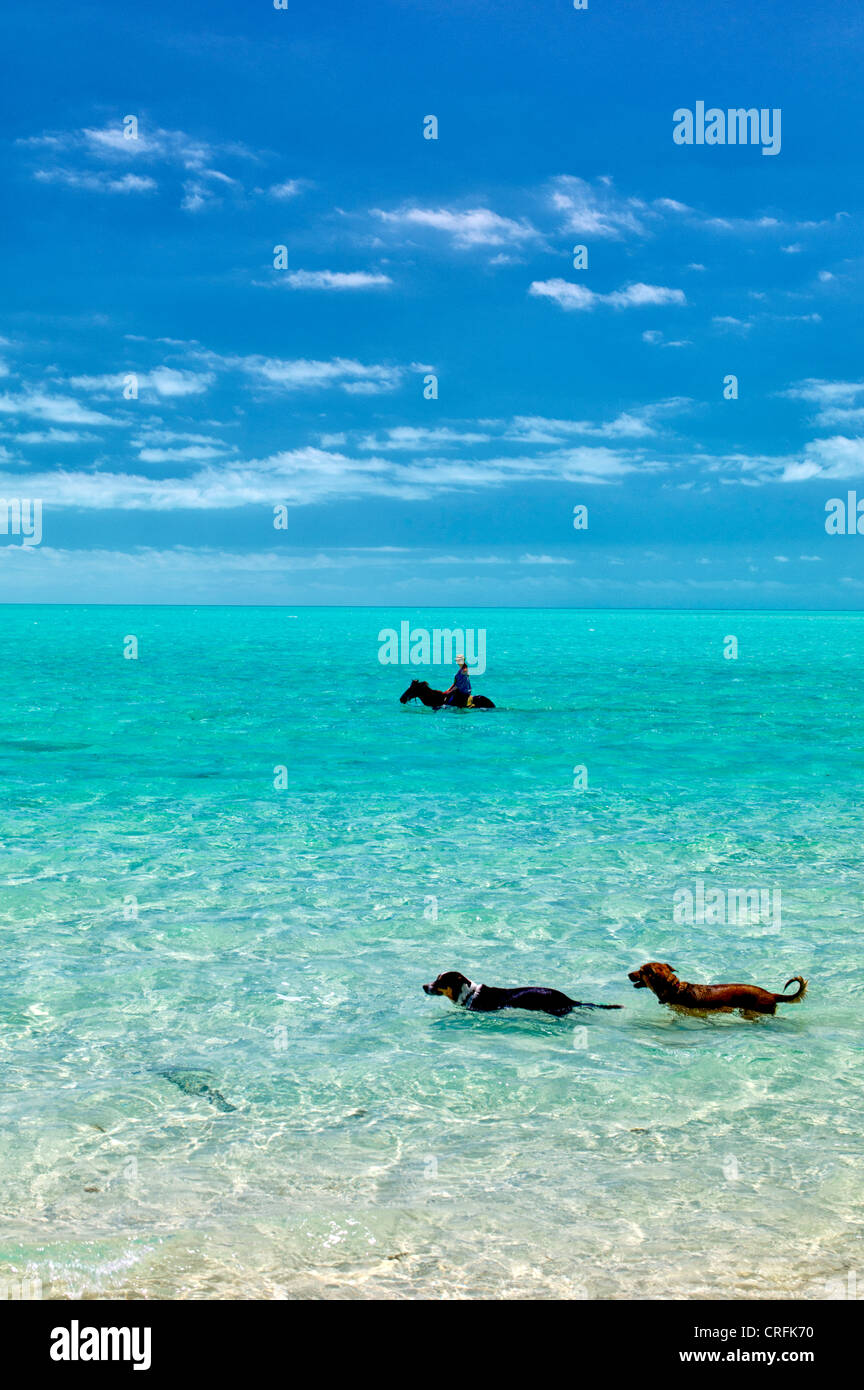 Horse riders in water with dogs. Providenciales. Turks and Caicos. - Stock Image