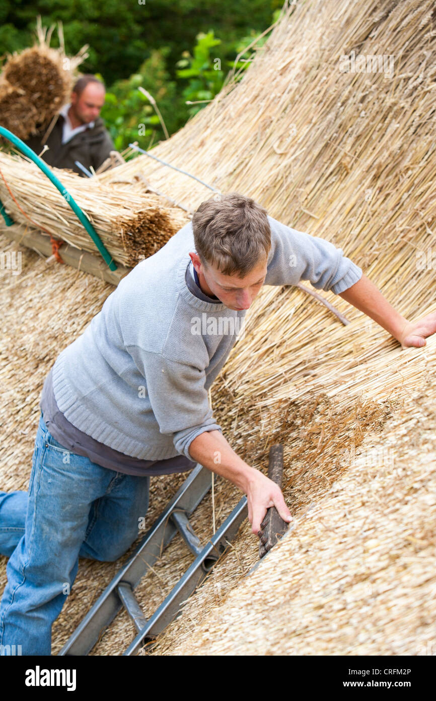 A skilled thatcher thatching a barn roof in Dorset, UK - Stock Image