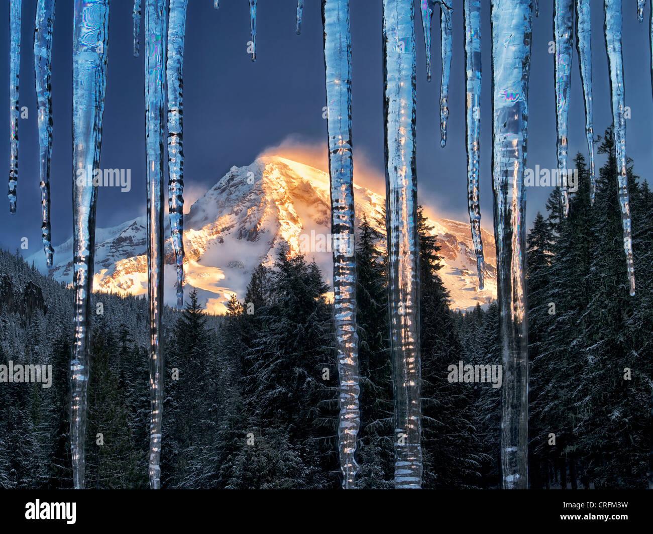 Icicles and Mt. Rainier. Mt. Rainier National Park, Washington - Stock Image
