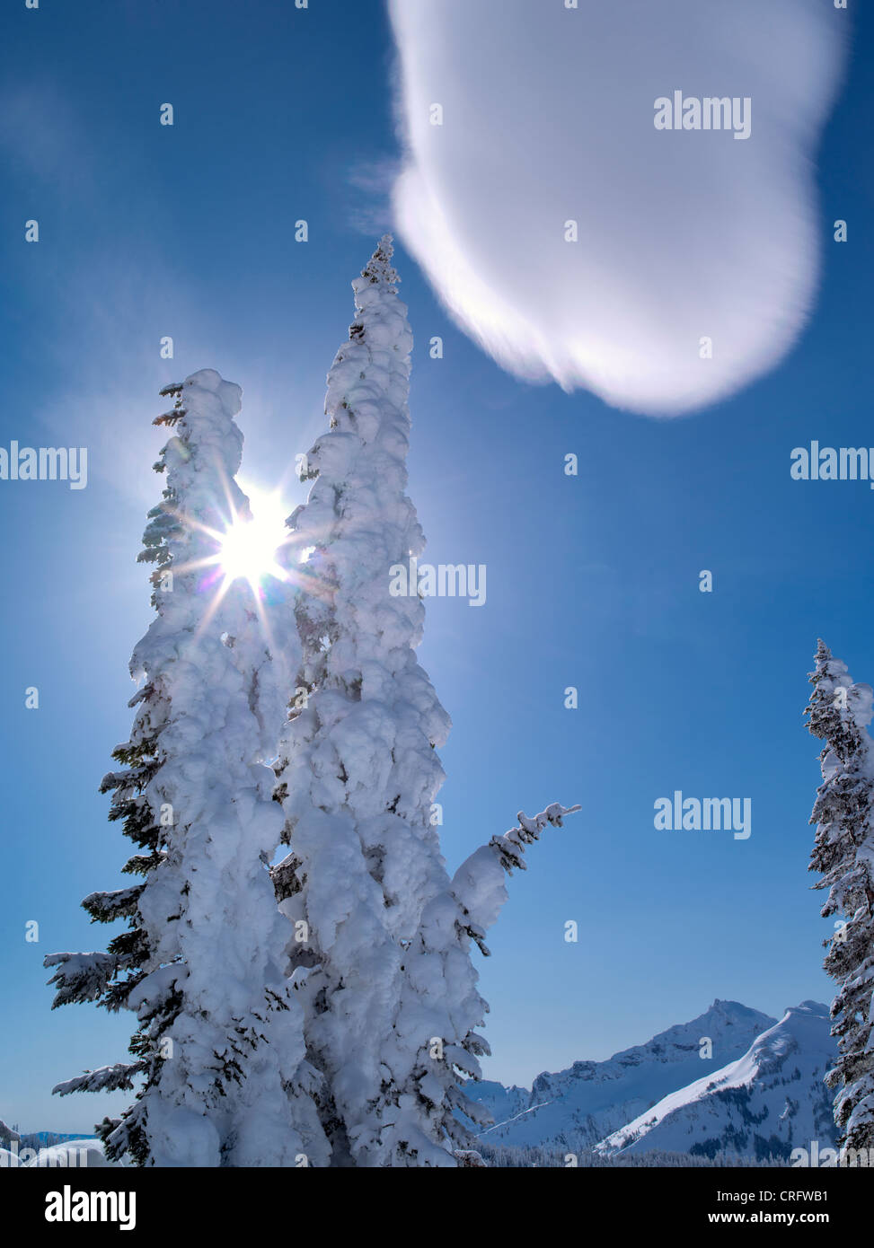 Snow covered trees with sunburst and cloud. Mt. Rainier National Park, Washington - Stock Image