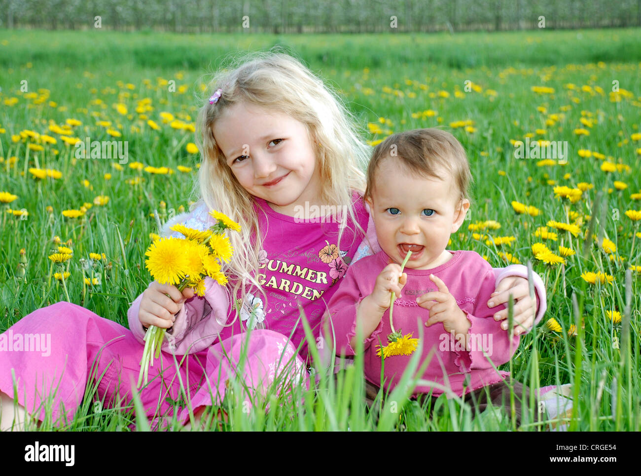 little girl with her younger sister sitting in dandelion meadow - Stock Image
