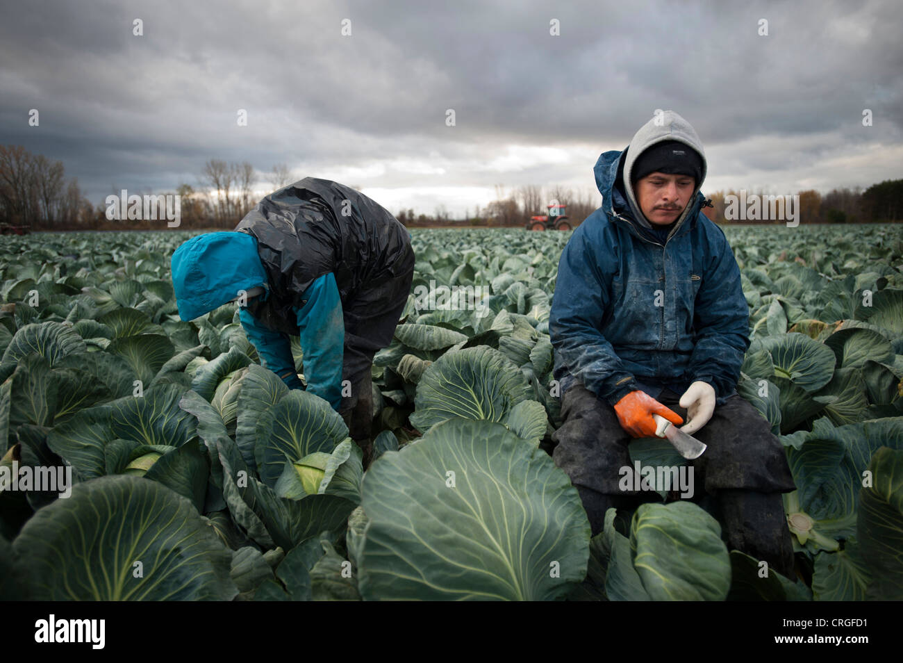 Mexican migrant farm workers in upstate New York, United States - Stock Image