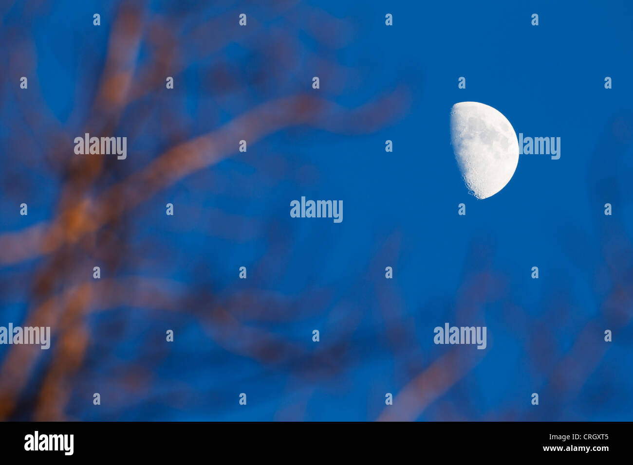 Super telephoto view of half moon through some bare forest tree branches. - Stock Image