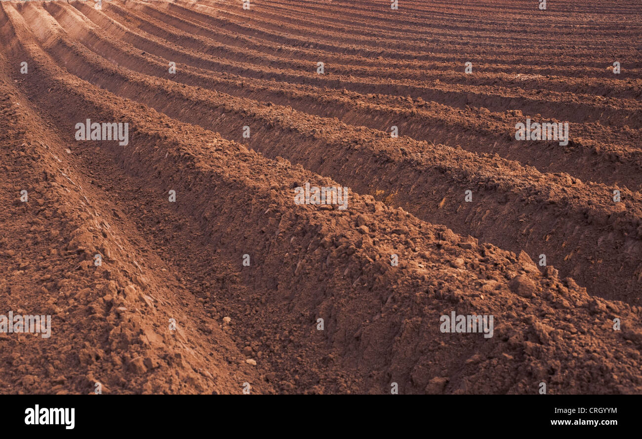 Ploughed field, Deep Furrows - Stock Image