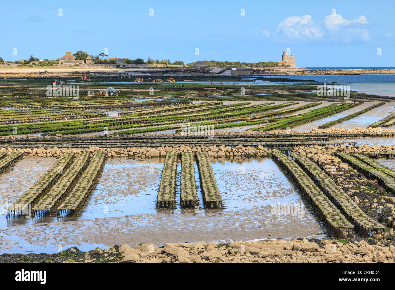 The oyster beds for which the fishing port of St-Vaast-La-Hougue, Normandy, France, is famous - Stock Image