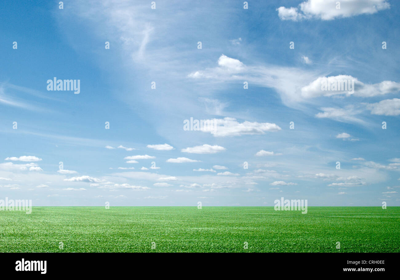 beauty blue sky and green grass - Stock Image