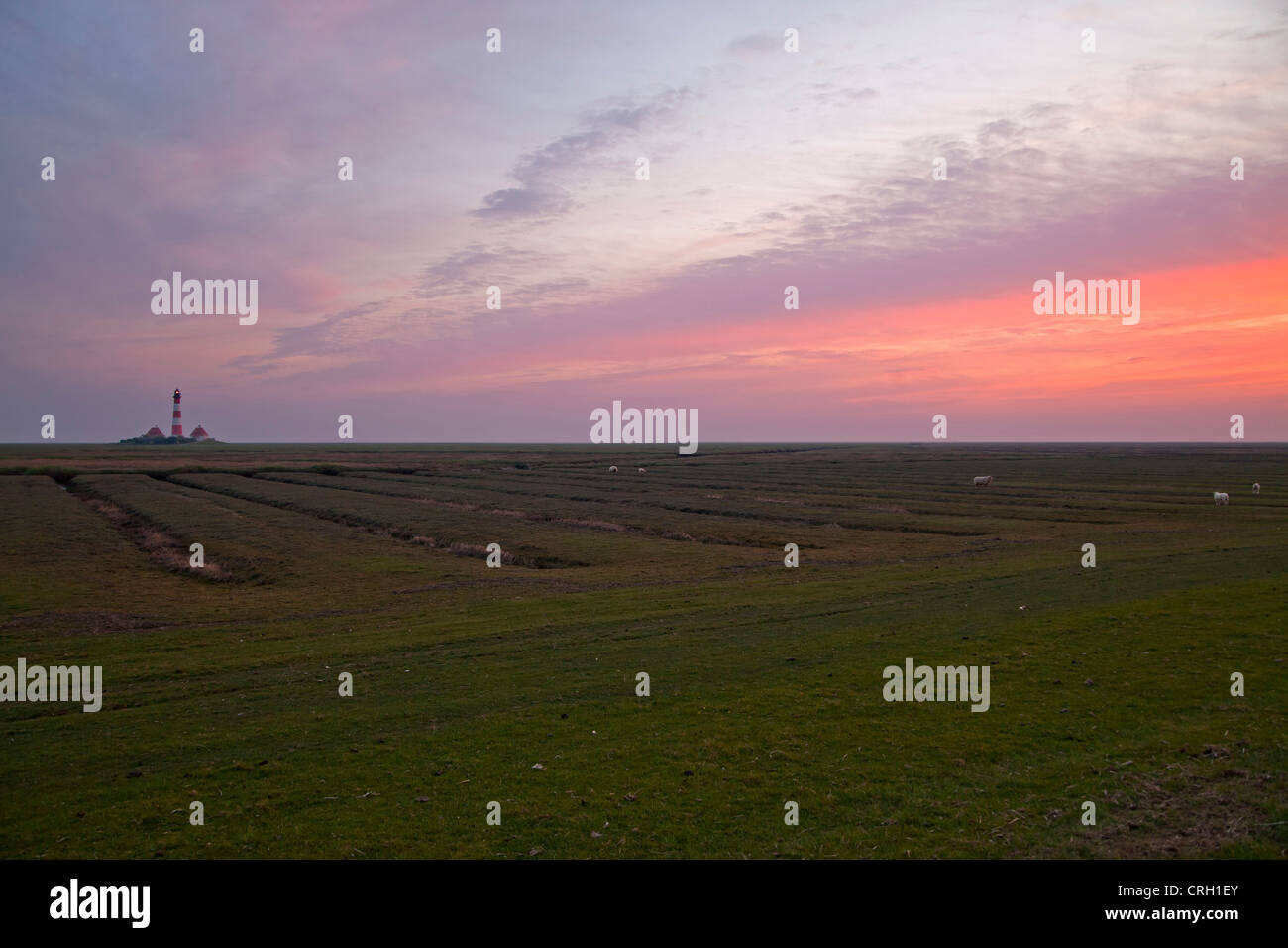 Westerheversand lighthouse and salt meadows at dusk, Westerhever, district of North Frisia, Schleswig-Holstein, Stock Photo