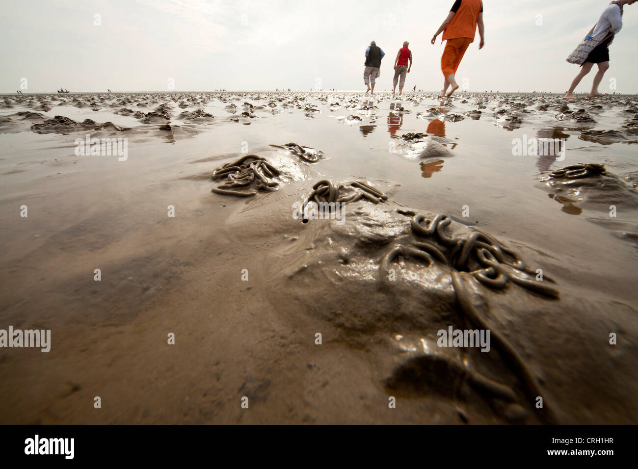 Lugworms and tourists on the mud flats during low tide, Wadden Sea, UNESCO World Heritage Site, Buesum, Germany - Stock Image