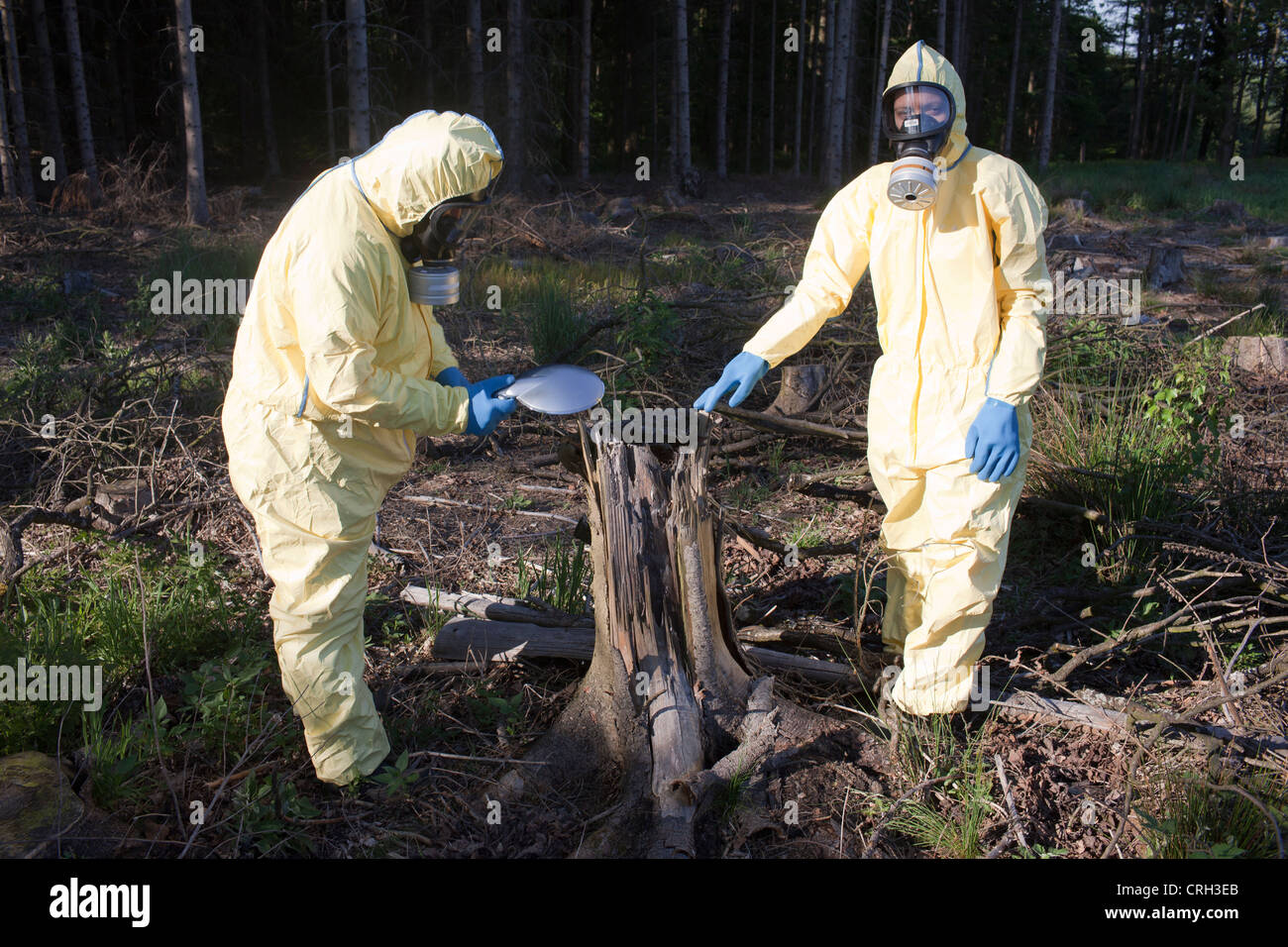 Two experts checking forest for radiation - Stock Image