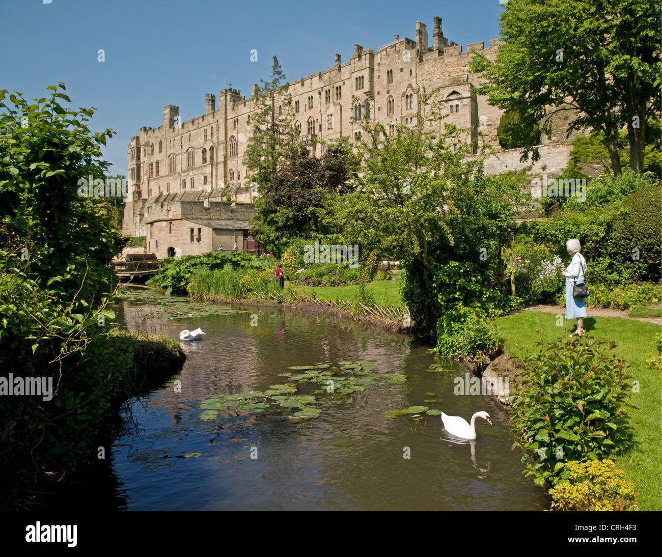 Warwick Castle with swans on the River Avon seen from a Mill Street Garden in sunshine with a blue sky Warwickshire - Stock Image