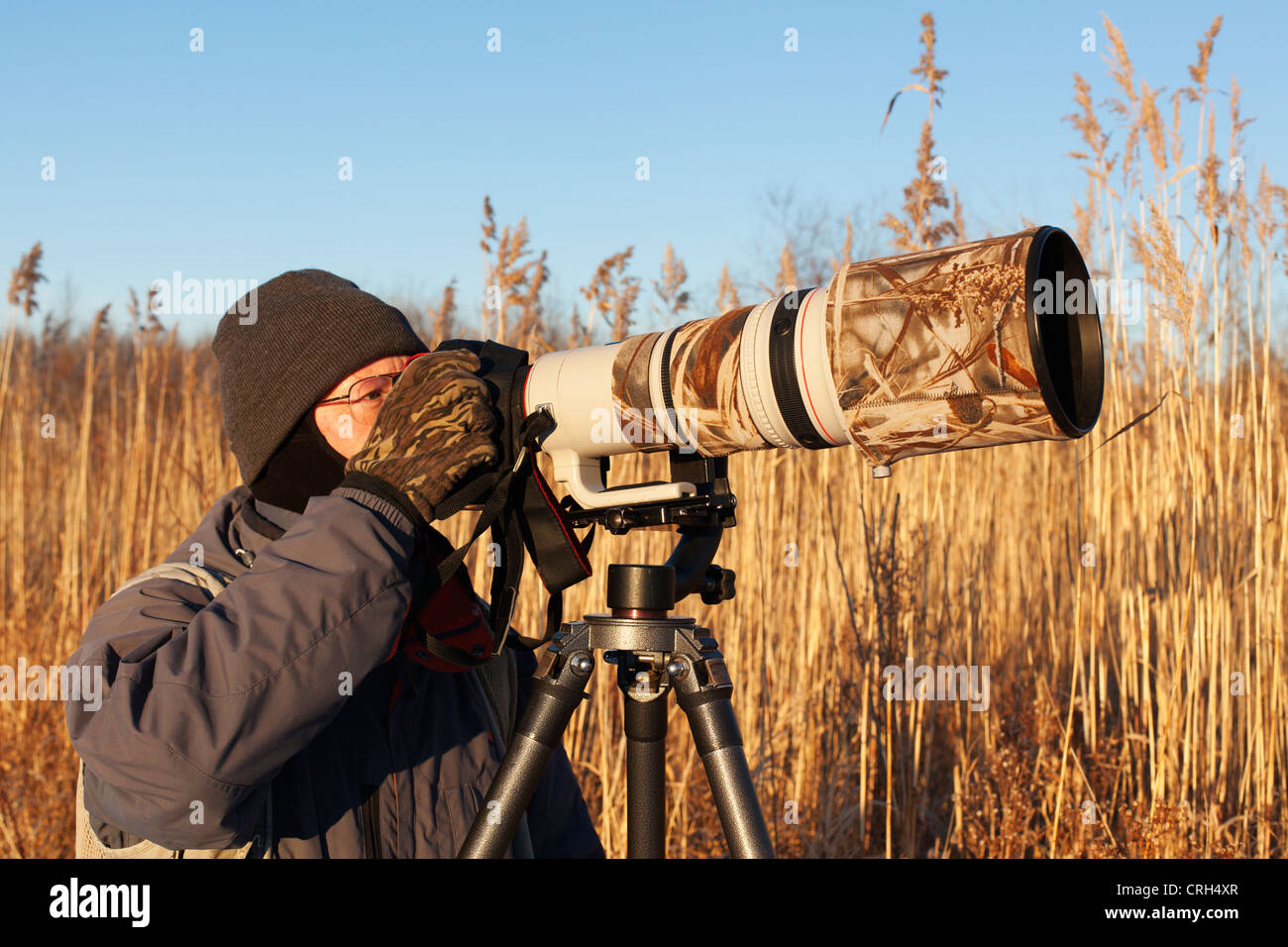 A wildlife nature photographer shooting with a super telephoto lens. - Stock Image