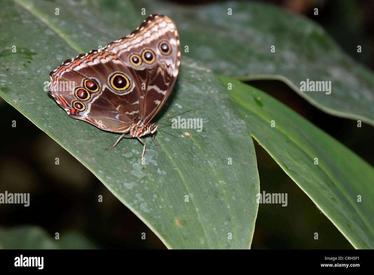 Schmetterlinge in der Natur - butterfly in nature Schmetterling - Butterfly Stock Photo
