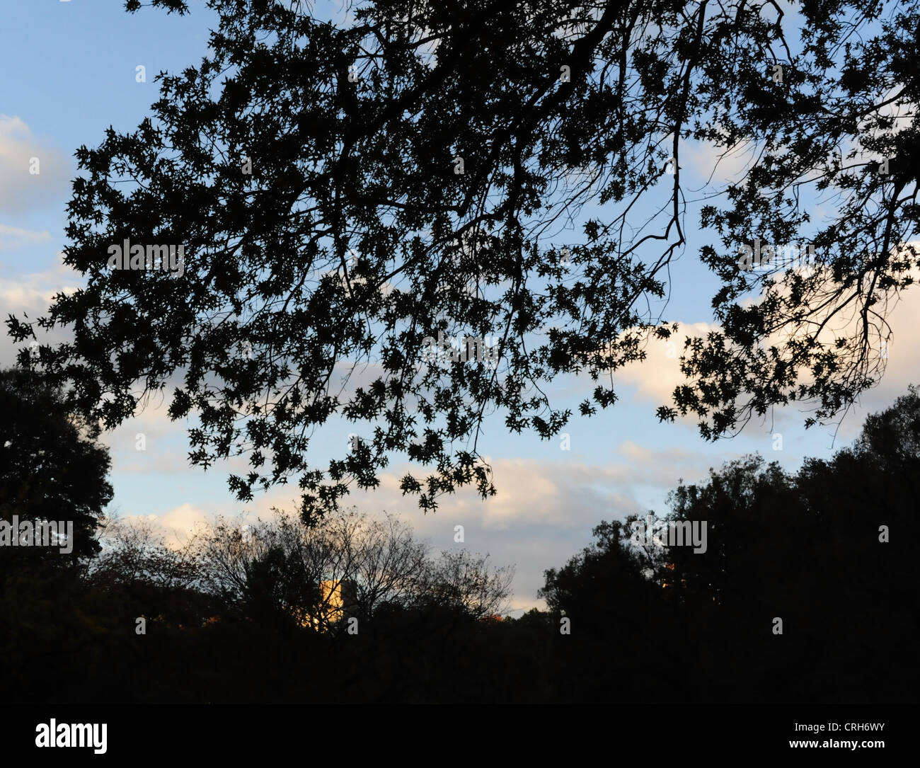 Blue Sky White Clouds Autumn Evening View Dark Leaves