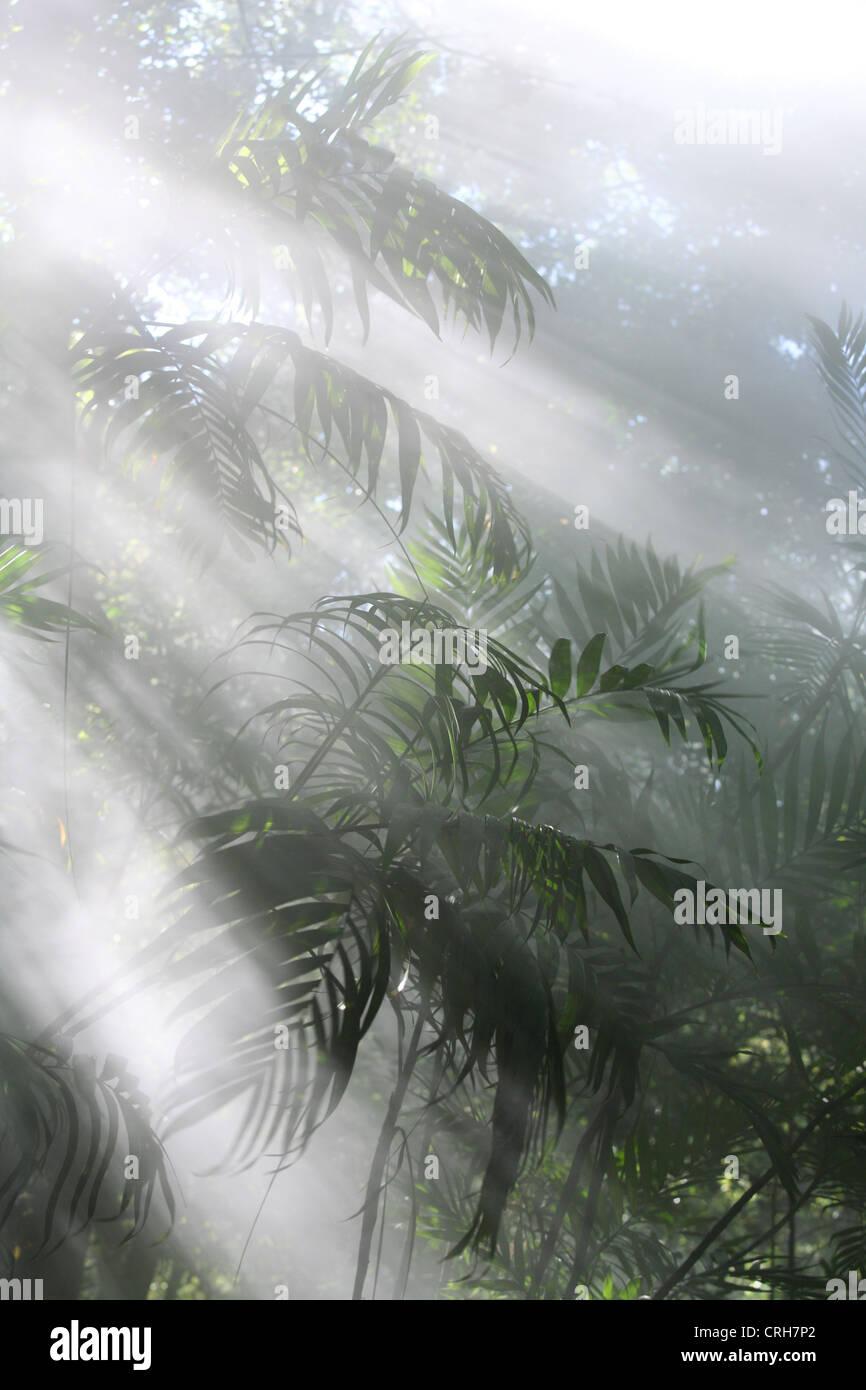 Rainforest with steam from volcanic fumaroles. Rincon de la Vieja National Park, Guanacaste, Costa Rica. February - Stock Image