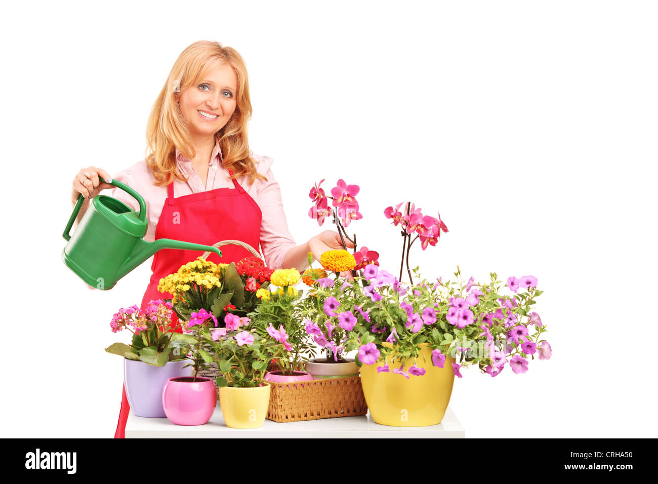 A beautiful female florist holding a can and watering flowers isolated on white background Stock Photo