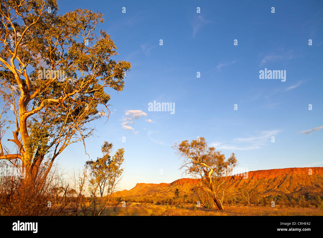 Ghost gums and the Heavitree Range, in the West MacDonnell Ranges outside of Alice Springs - Stock Image