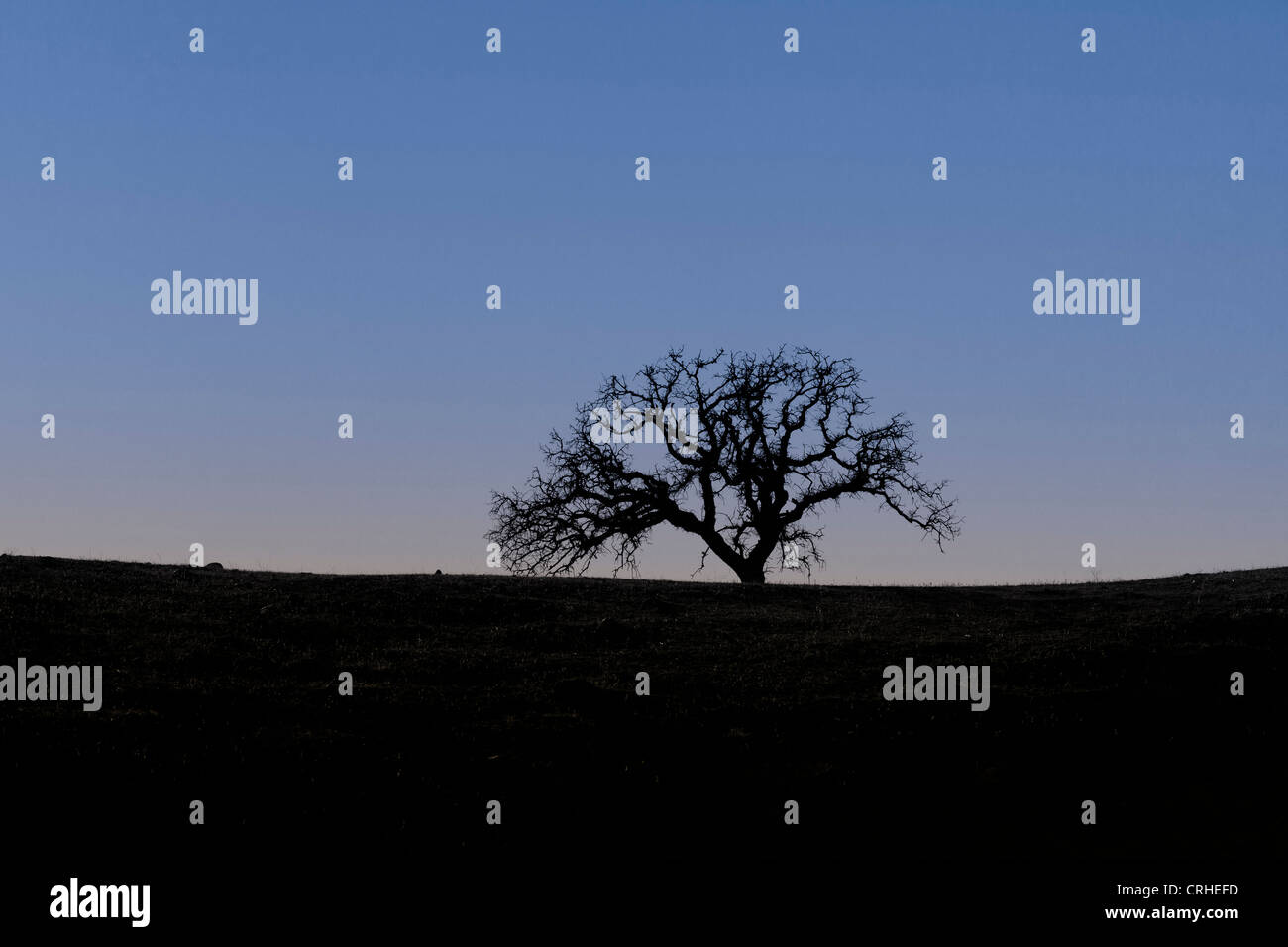 A lone tree at dusk - Stock Image