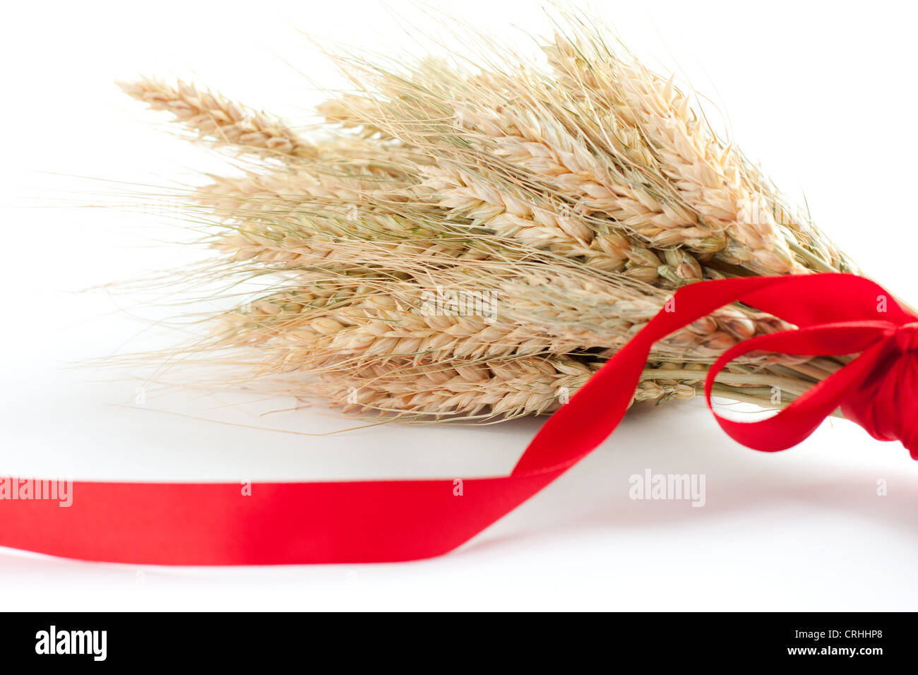 Spikes of wheat. Ripe ears of corn tied with red ribbon - Stock Image