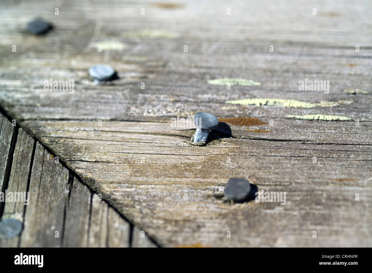 weathered old wood with nail heads - Stock Image