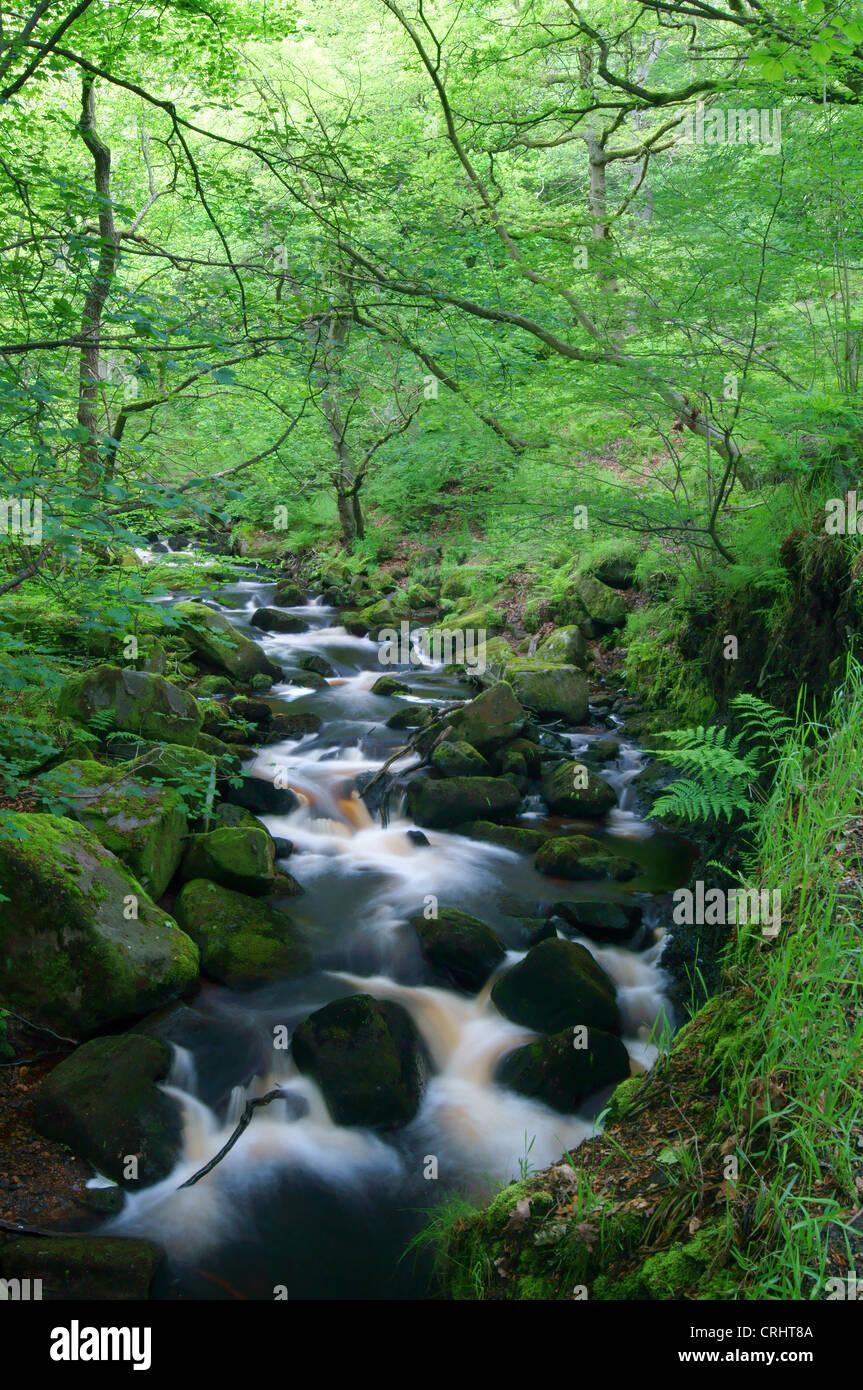 UK,Derbyshire,Peak District,Burbage Brook Flowing Through Padley Gorge - Stock Image